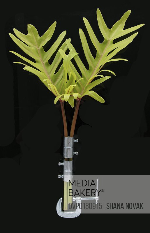 Tropical Branches Braced with Hardware