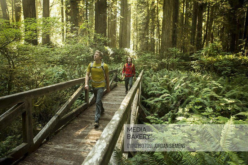 Hiking through the Redwood forest