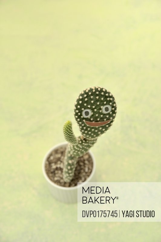 A cactus with the face
