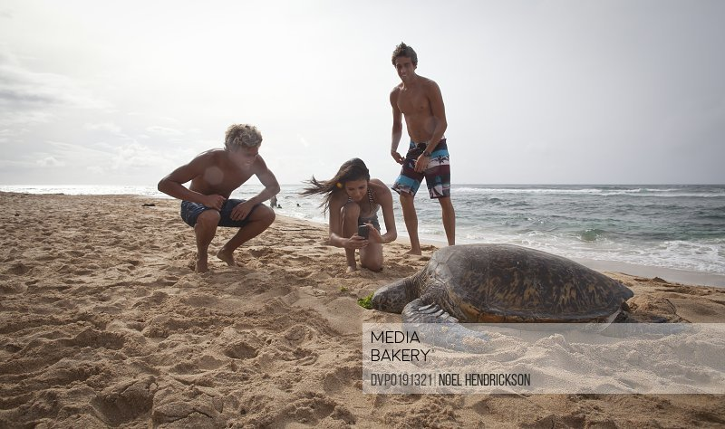 Young adults photograph a sea turtle