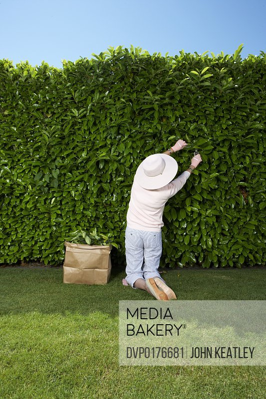 Mature woman trimming hedge