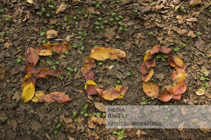 ECO written with fallen leaves that turn red on