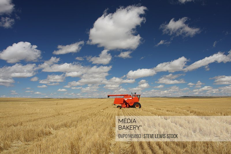 Wheat field with a combine in background