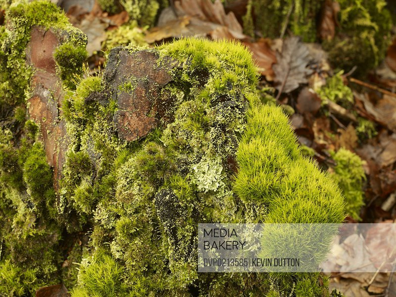 Vibrant green close up detail of moss