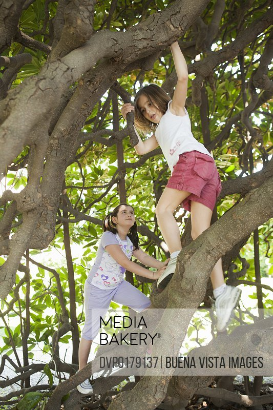 Girls climbing Magnolia tree