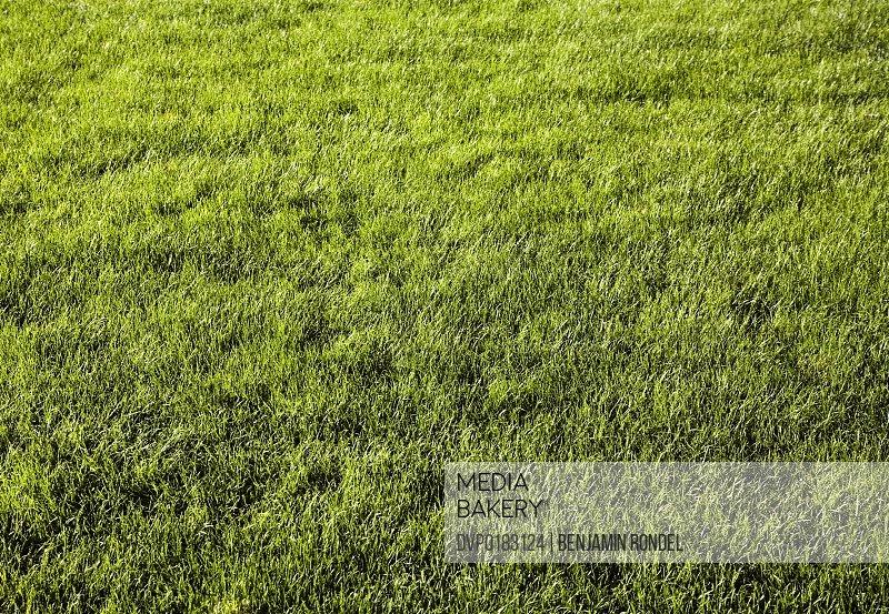 Green lawn in public park