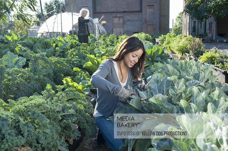 Women Working in Urban Organic Community Garden