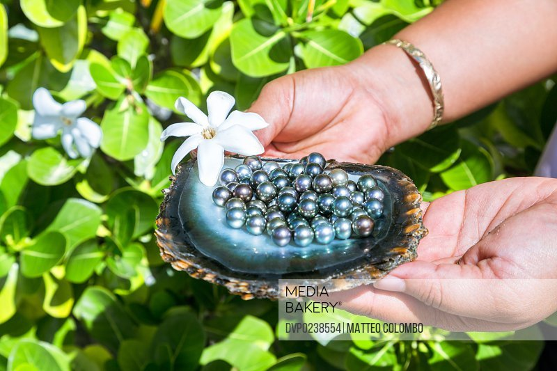 The famous black pearls of Tahiti in a oyster shell with frangipani flower, Rangiroa, French Polynesia, Oceania