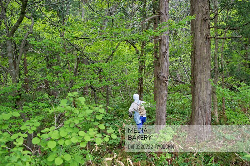 Picking wild plants in the forest of the fresh green