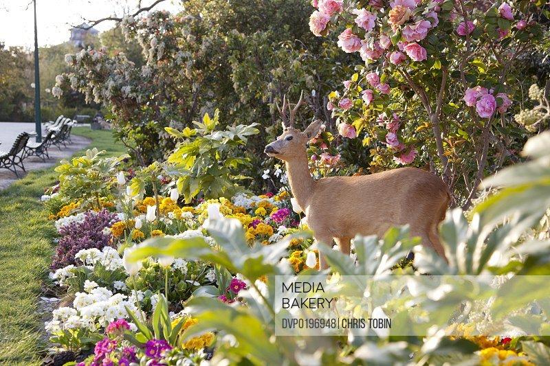 Deer standing in flowers in the park