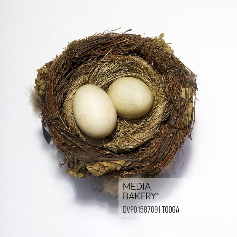 Overhead shot of natural eggs in bird's nest