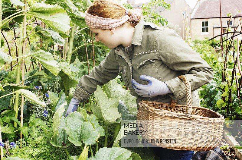 inner city urban allotment gardening project
