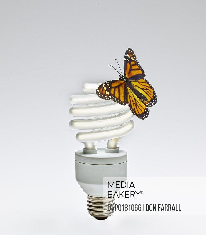 Monarch Butterfly on Fluorescent lightbulb