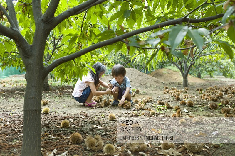Boy and girl who picks up chestnut