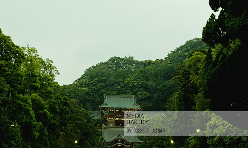 Tsurugaoka Hachiman-g? Kamakura Japan