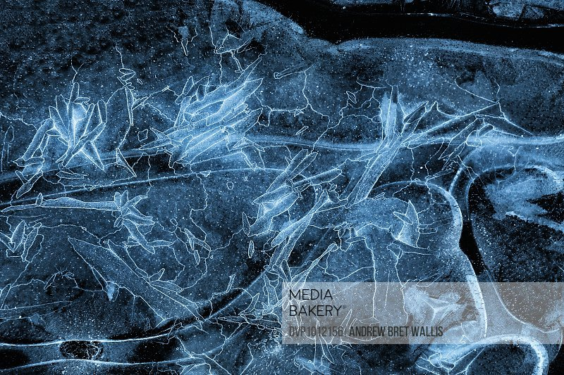 Naturally formed patterns in pond ice.
