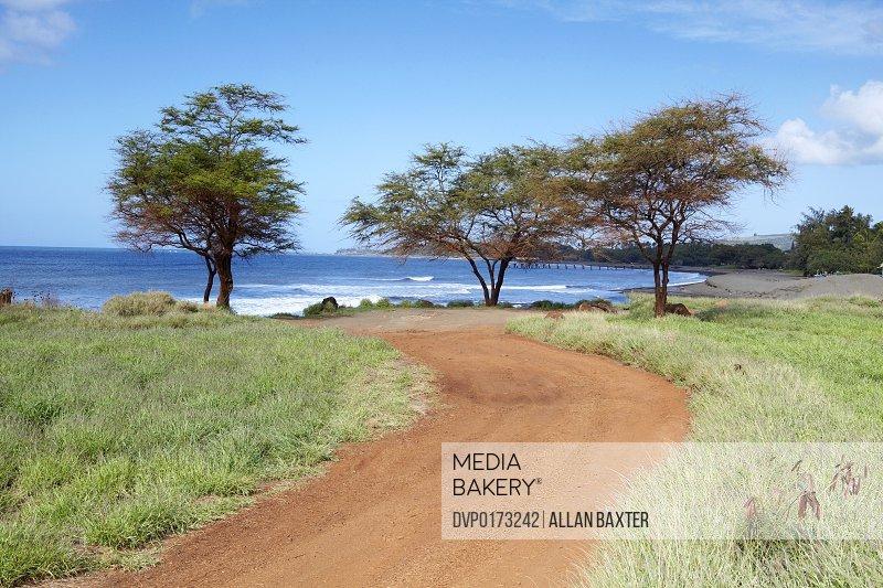 Trees by Waimea beach