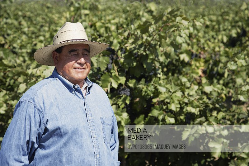 Senior man wearing hat standing in vineyard