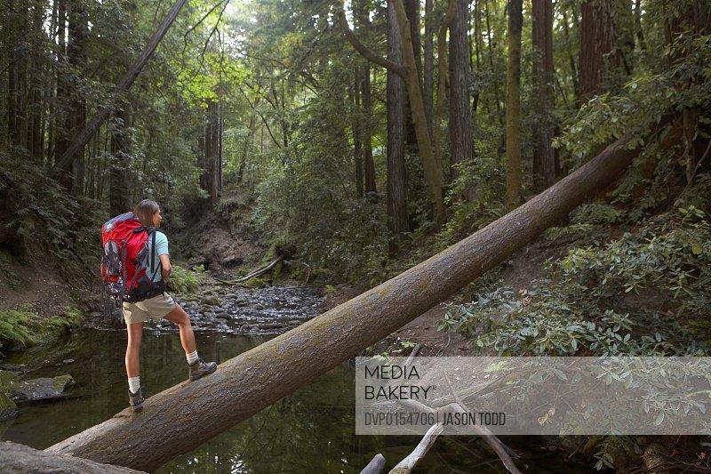 enjoying Nisene Marks Redwood Forest State Park