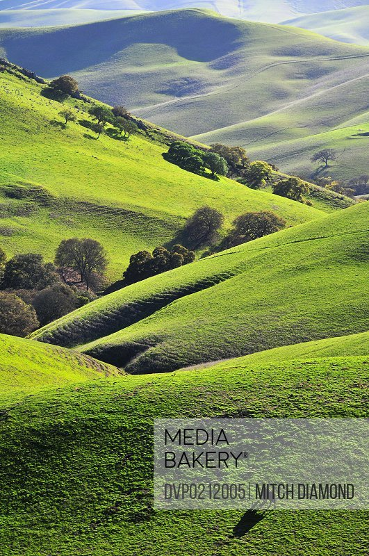 Green rolling hills of central California