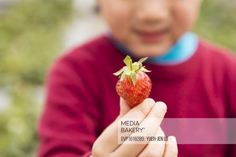 Child hand holding red strawberry