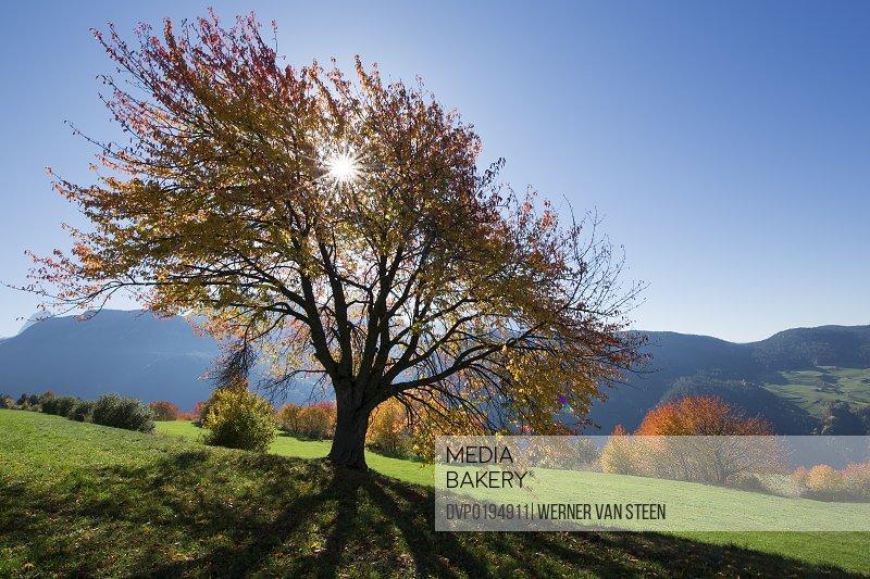 Sun and autumn colored tree