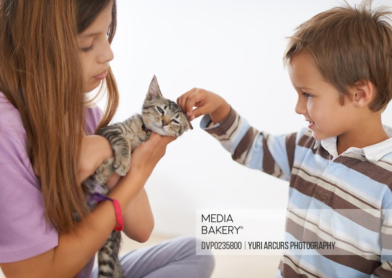 A cropped shot of young siblings petting a kitten affectionately