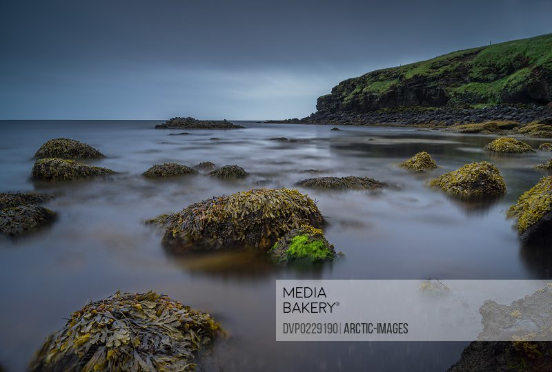 Coastline with seaweed and moss Icealnd