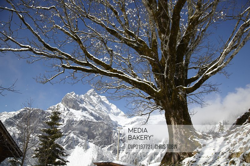 Snow-covered tree in the mountains