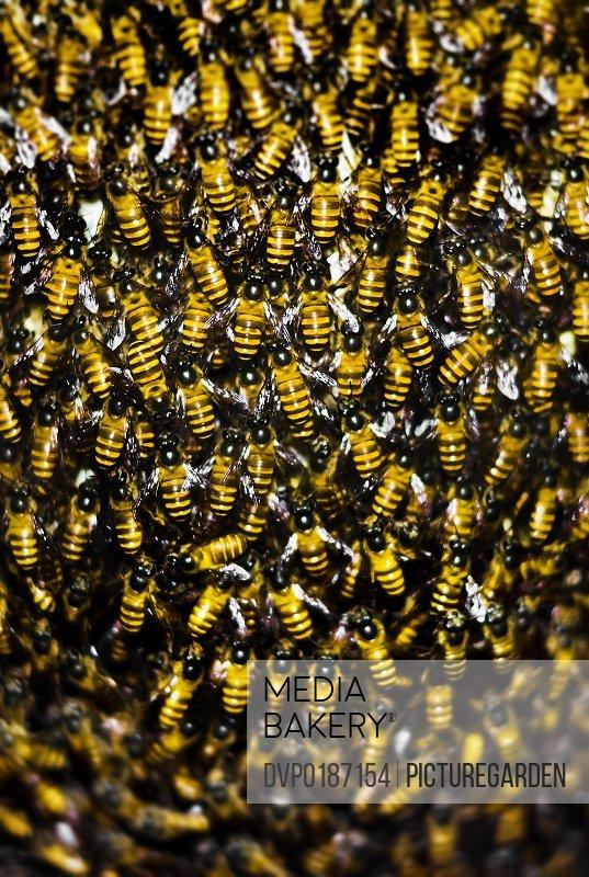 inside organic rain forest beehive