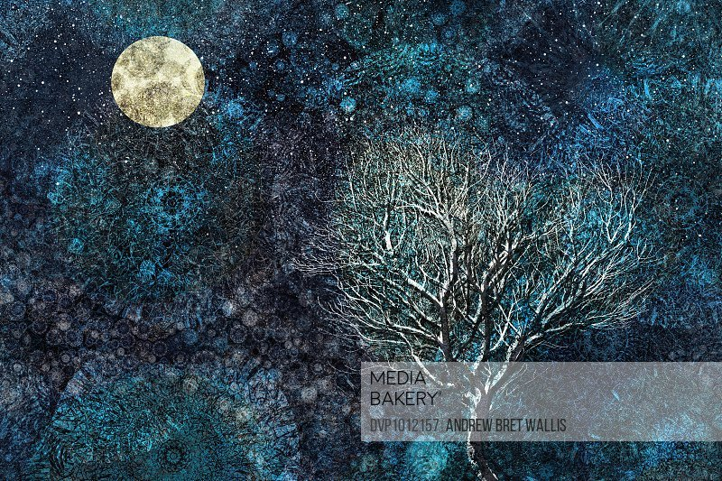 Moonlit winter tree against a starry sky