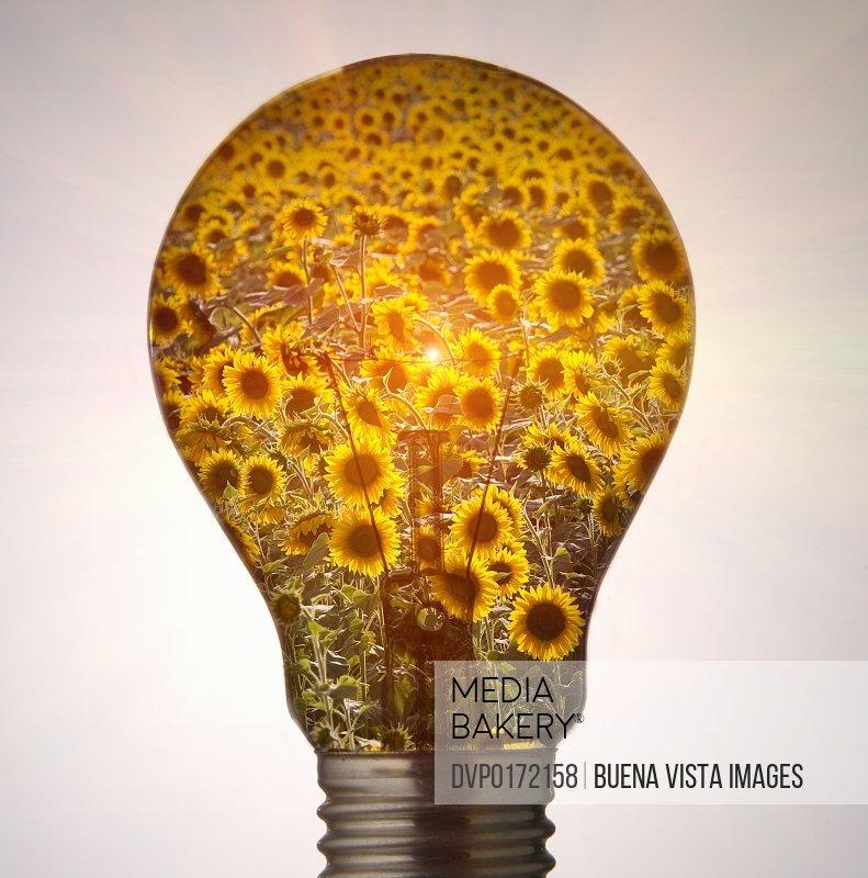 ecologic bulb/n