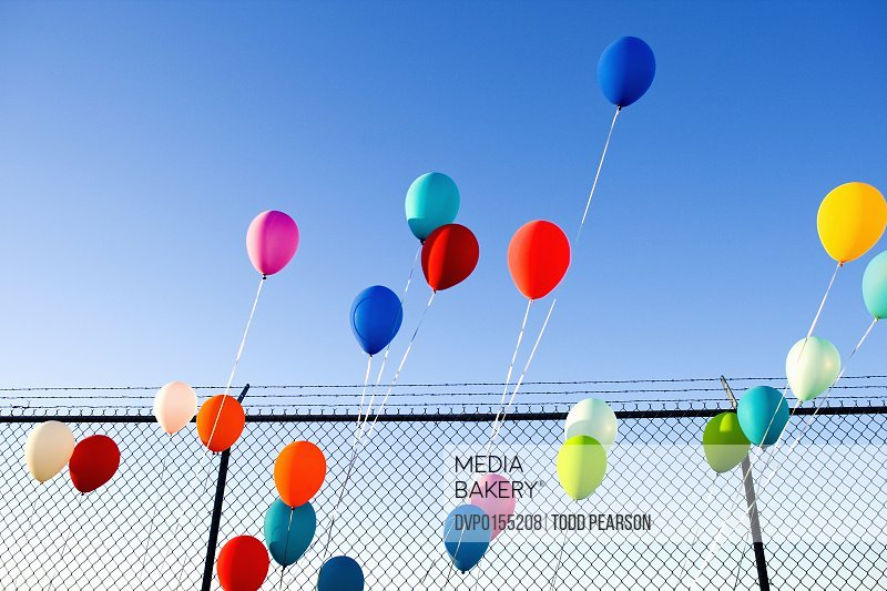 Multi-colored balloons tied in scattered pattern to front of chain-link fence; balloons all slanted to right