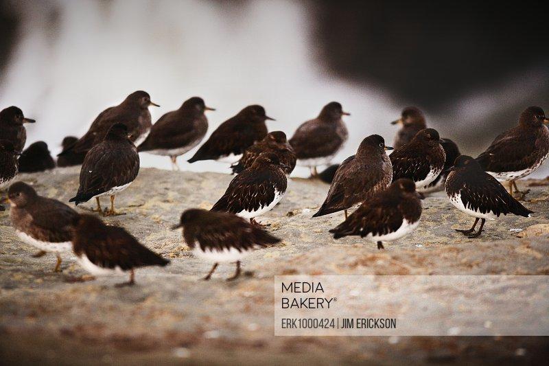 Birds on a rock.