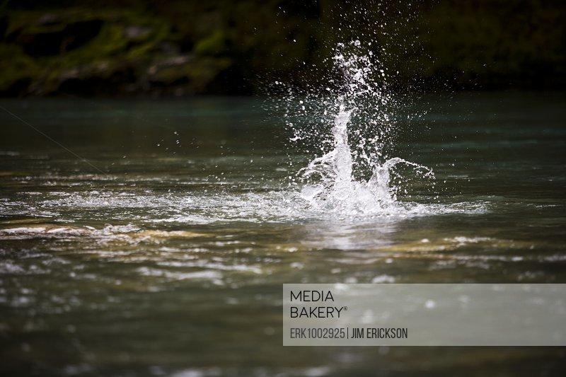 Fishing hook and sinker splashing into river.
