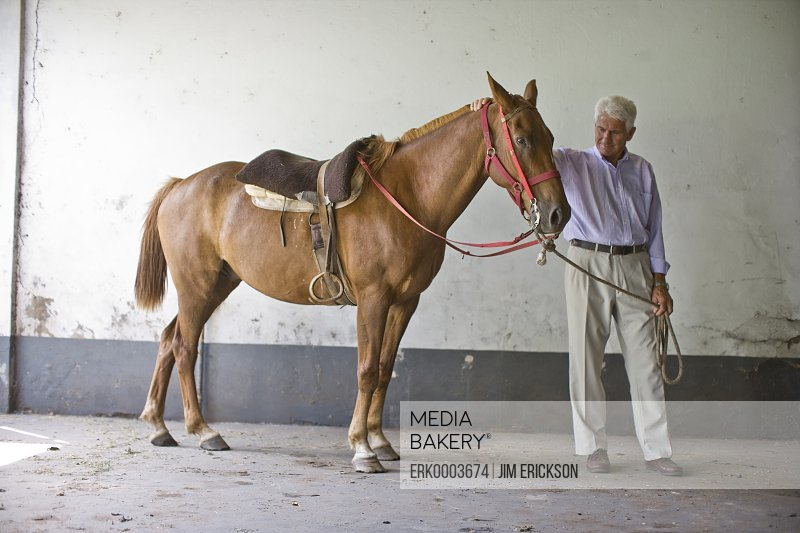 Senior adult man standing with a horse in a stable.
