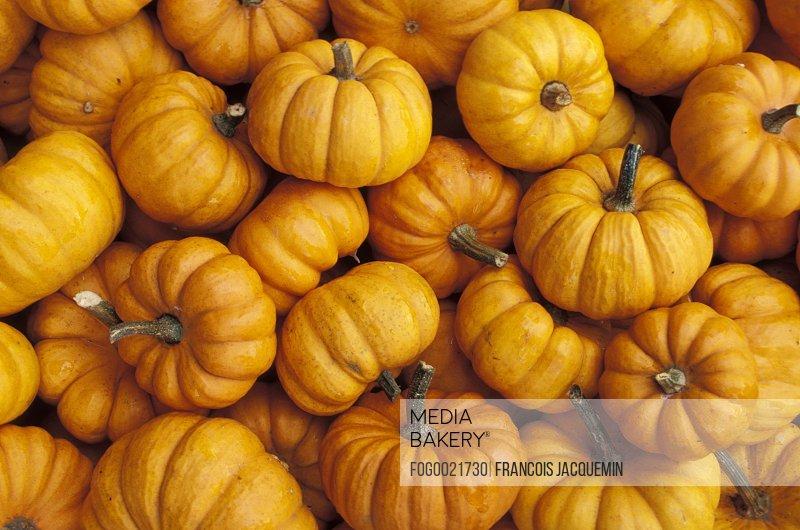 Small decorative pumpkins