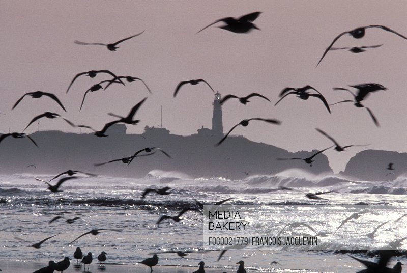 Lighthouse and birds, Oregon