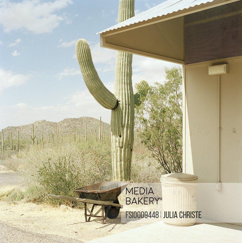 A cactus plant next to a building