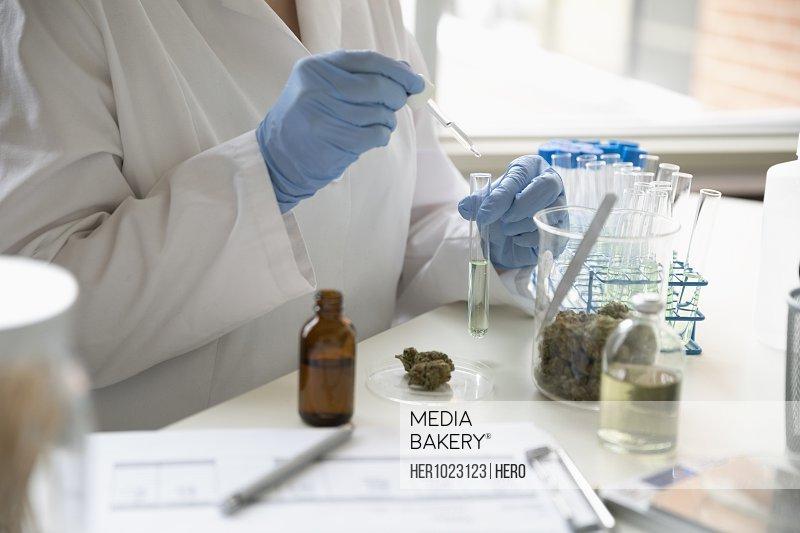 Quality control specialist testing marijuana oil
