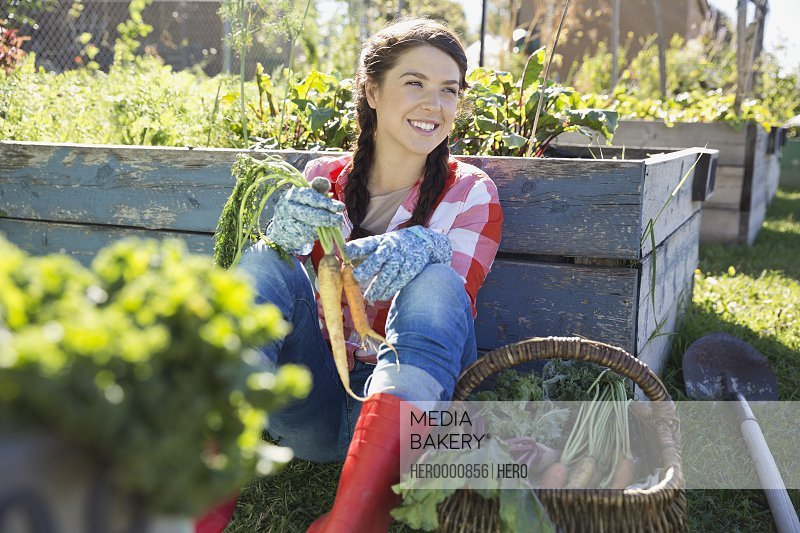 Woman holding freshly harvested carrots in community garden