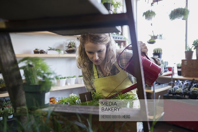Terrarium shop owner watering plants