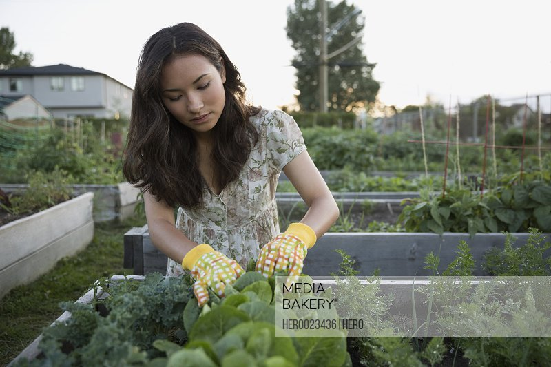 Teenage girl tending to plants in vegetable garden