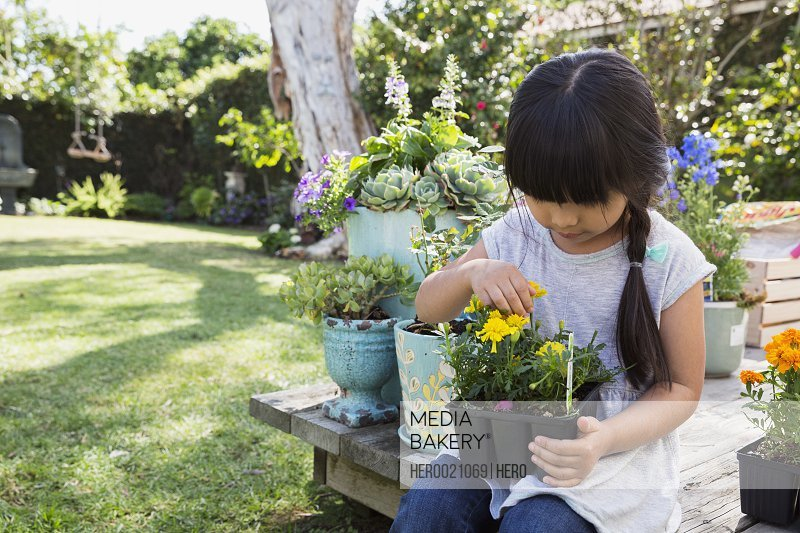 Curious girl inspecting potted flower in garden