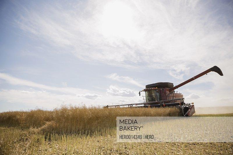 Combine harvester working in sunny crop field
