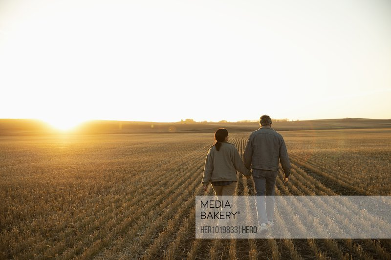 Farmer couple holding hands, walking in sunny harvested field at sunset