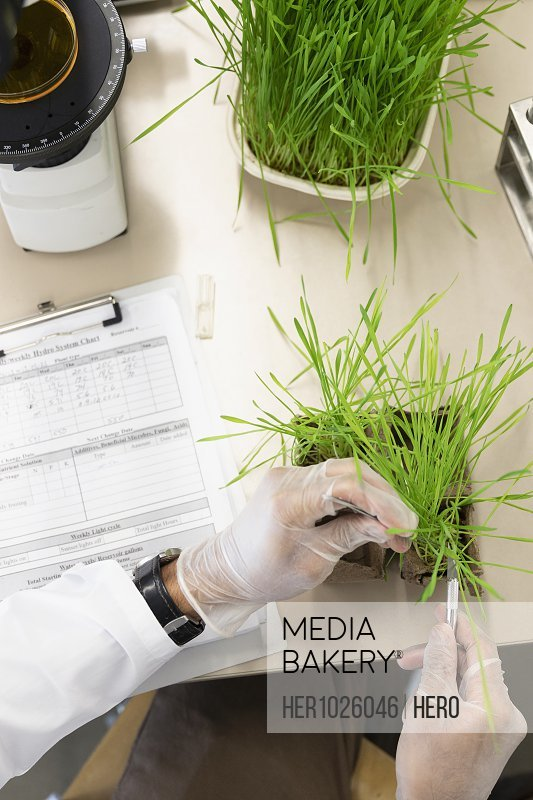 View from above environmental scientist examining plant in laboratory