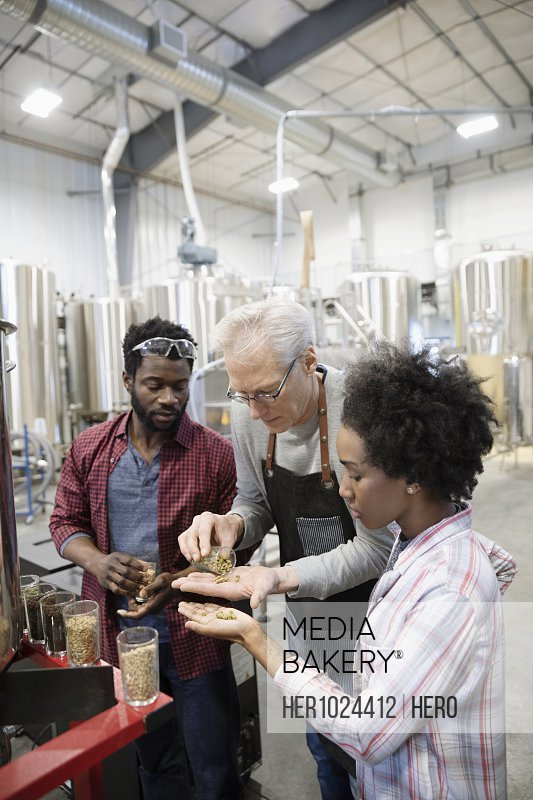 Brewers examining hops in brewhouse distillery