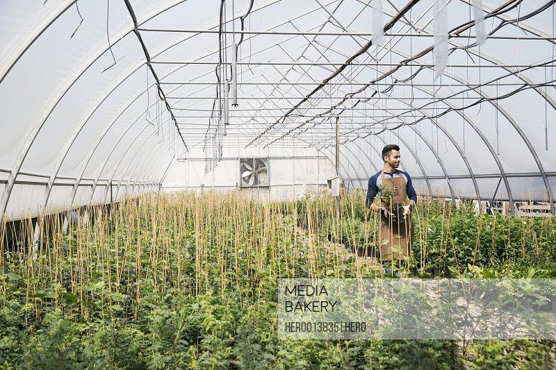 Worker in plant nursery greenhouse
