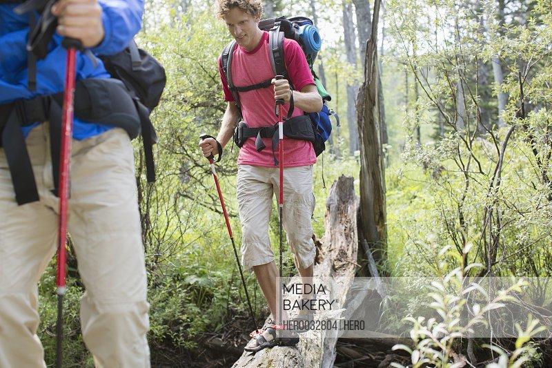 hikers walking on fallen tree bridge